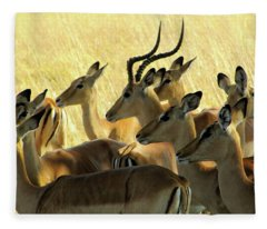 Impalas In The Plains Fleece Blanket