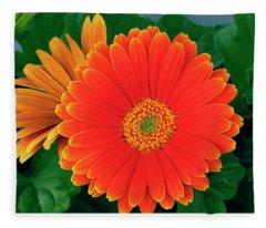 In Glorious Color - Gerberas Fleece Blanket