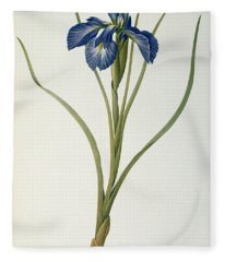 Iris Xyphioides Fleece Blanket