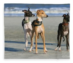 Italian Greyhounds On The Beach Fleece Blanket