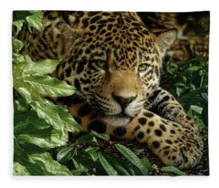 Jaguar - At Rest Fleece Blanket