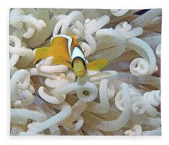 Juvenile Red Sea Clownfish, Eilat, Israel 3 Fleece Blanket