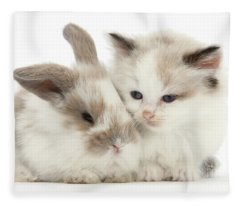 Kitten Cute Fleece Blanket