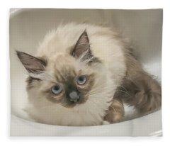Kitty Blue Eyes Fleece Blanket