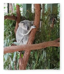 Koala Fleece Blanket