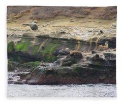 La Jolla Sea Lions Fleece Blanket