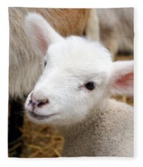 Lamb Fleece Blanket