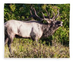 Large Bull Elk Bugling Fleece Blanket
