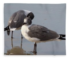 Laughing Gull Fleece Blanket