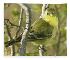 Lesser Goldfinch 1 Fleece Blanket