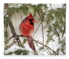 Leucistic Northern Cardinal Fleece Blanket