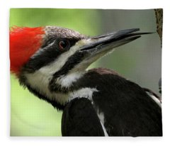 Lick It Up - Pileated Woodpecker Fleece Blanket