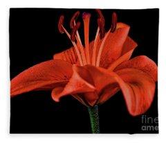 Lily 11018-1 Fleece Blanket