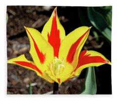 Lily Tulip Fleece Blanket