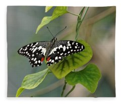 Lime/chequered Swallowtail Butterfly Fleece Blanket