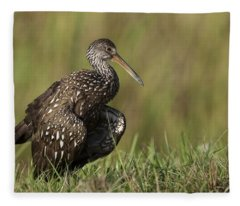 Limpkin Stretching In The Grass Fleece Blanket