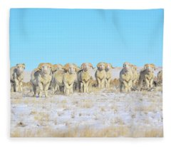 Line Em Up Rams Fleece Blanket