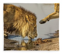 Lion Affection Fleece Blanket