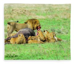 Lion Pride With Cape Buffalo Capture Fleece Blanket