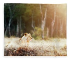 Lioness In Morning Sunlight After Breakfast Fleece Blanket