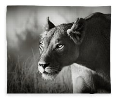 Lioness Stalking Fleece Blanket