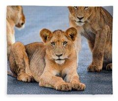 Lions Stare Fleece Blanket
