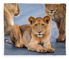 Lions Stare Fleece Blanket