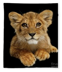 Little Lion Fleece Blanket