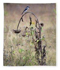 Loggerhead Shrike On Wilted Sunflower Fleece Blanket
