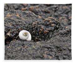 Lone Seashell Fleece Blanket