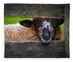 Fleece Blanket featuring the photograph Lookin At Ewe by Skip Hunt