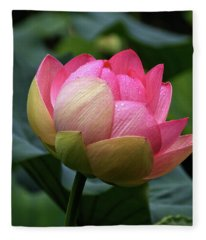 Luscious Lotus With Raindrops Fleece Blanket