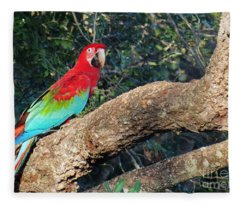 Macaw Resting Fleece Blanket