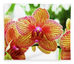 Magenta And Yellow Orchids - Close Up Against Blurred Background Fleece Blanket