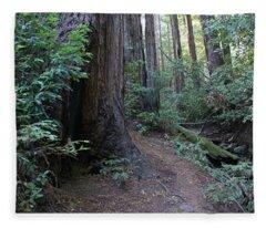 Magical Path Through The Redwoods On Mount Tamalpais Fleece Blanket