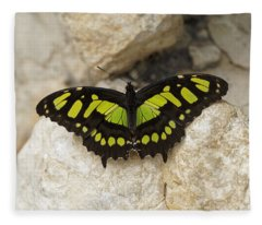 Fleece Blanket featuring the photograph Malachite Butterfly - Siproeta Stelenes by Paul Gulliver