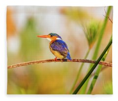 Malachite Kingfisher Hunting Fleece Blanket