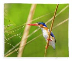 Malalchite Kingfisher Fleece Blanket