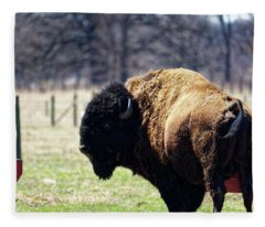 Male Bison Fleece Blanket