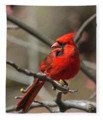 Male Northern Cardinal In Spring Fleece Blanket