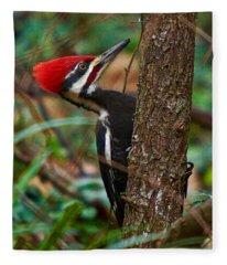 Male Pileated Woodpecker Fleece Blanket