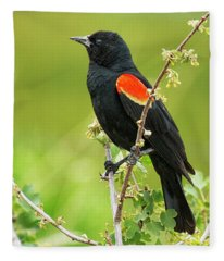 Male Red-winged Blackbird Fleece Blanket