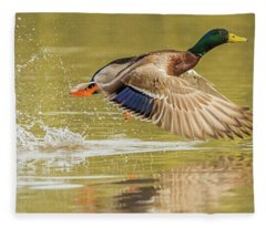 Mallard Duck 1952-112017-2cr Fleece Blanket