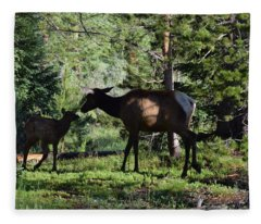 Elk Calf - Mother Rmnp Co Fleece Blanket
