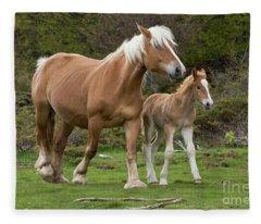 Mare And Foal In France Fleece Blanket