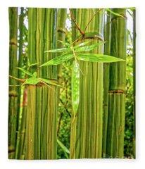 Maui Bamboo  Fleece Blanket