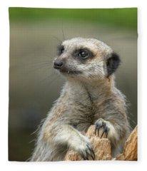 Meerkat Model Fleece Blanket