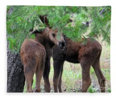Moose Calves Fleece Blanket