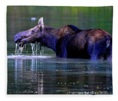 Moose In Swiftcurrent Lake, Glacier National Park Fleece Blanket