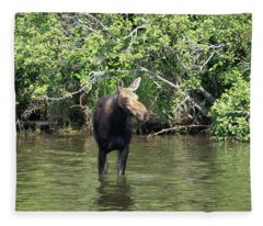 Moose Wading Fleece Blanket